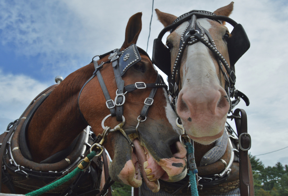 Looking like characters straight out of a Disney movie, these expressive fair faces were captured by frequent contributor Brian K. Lovering of North Yarmouth.