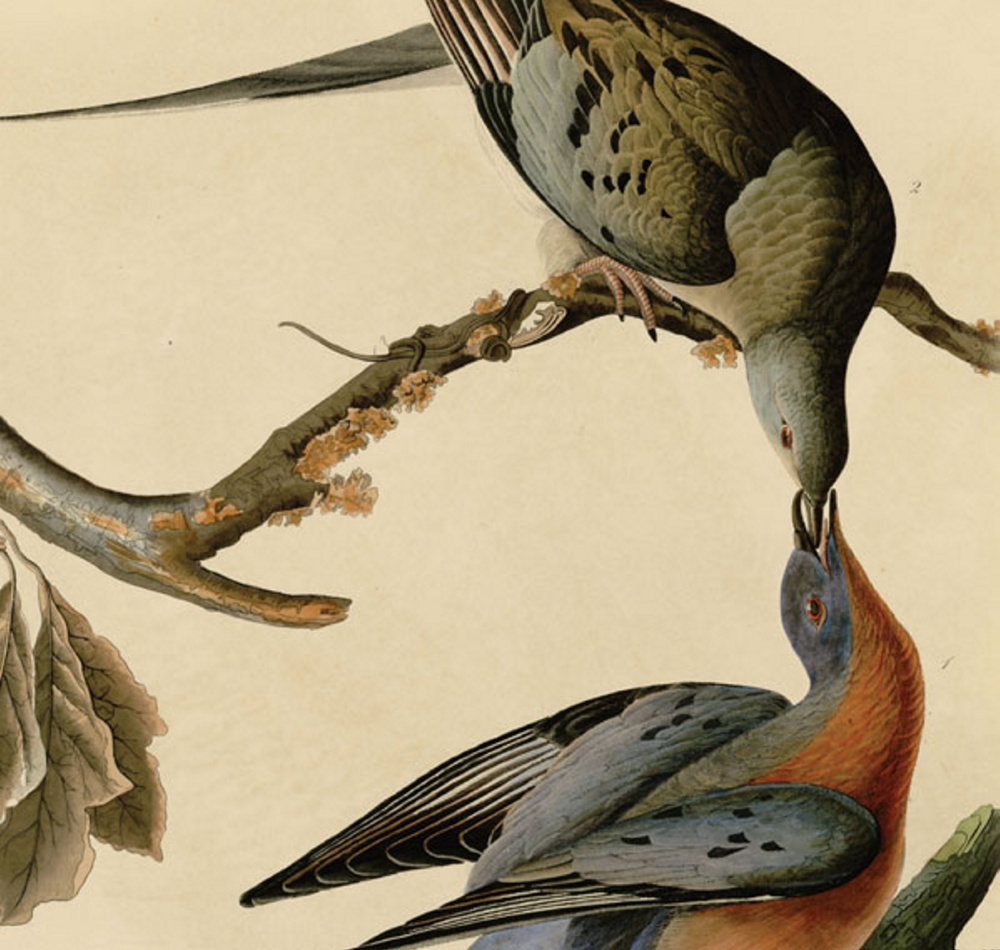 """From Billions to None,"" a documentary about the extinction of passenger pigeons a century ago, will be screened Thursday at the Yarmouth History Center. The film follows naturalist Joel Greenberg and others as they examine the species' demise and its relevance to 21st-century environmental challenges."