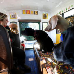 The Portland Bark Bus picks up dogs and tires them out for you. Casey Warren entertains the dogs as Dylan Harris drives to a private tract of land in Windham where they spend most of the day.  Derek Davis/Staff Photographer
