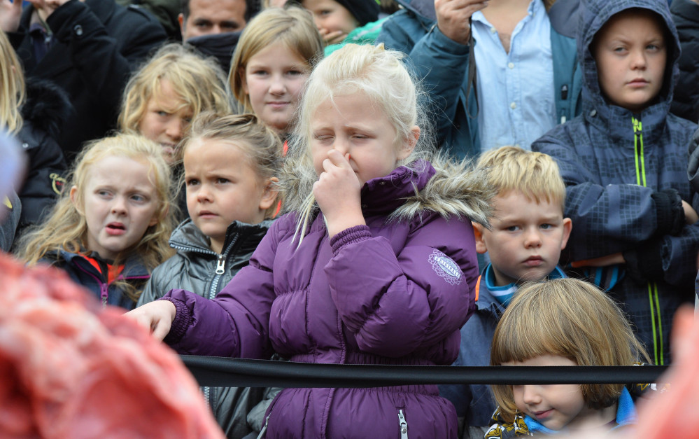 Parents and children watch the dissection of a male lion at Odense Zoo, Denmark, on Thursday.
