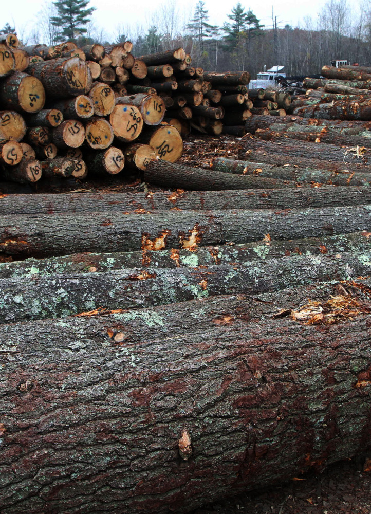 It takes more than a lifetime to grow a fully mature tree and about five seconds to bring it down, a Maine forester writes.
