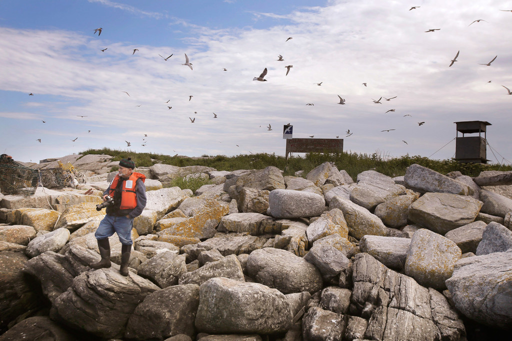 Stephen Kress, an ornithologist with Cornell University, stands on the shore of Eastern Egg Rock. Kress has spearheaded the 42-year effort to restore puffin breeding colonies to Eastern Egg Rock and two other midcoast Maine islands.