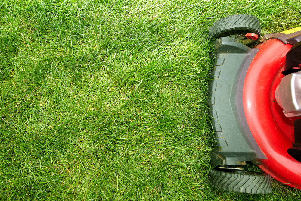 The proposal goes beyond weed and bug killers to include synthetic lawn fertilizers, which some believe contribute to the acidification of Maine's coastal waters and harm plant and animal species. Shutterstock photo