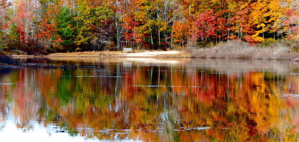Autumn's a time for reflection, and Long Pond along the trails of Ferry Beach State Park in Saco proved an ideal place for Linda Rogoff of Portland to appreciate Mother Nature's coat of many colors in what's been a fall worthy of legends.
