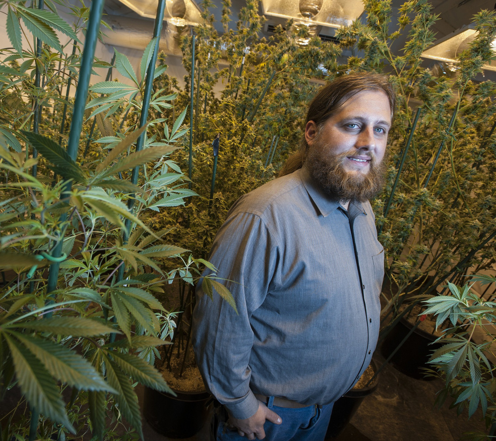 Paul McCarrier, seen with his medical marijuana growing operation, will speak on medical marijuana law at the Portland Cannabis Convention this weekend.