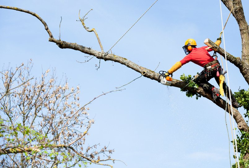 Maine Gardener Hire An Arborist To Do Those Scary Jobs Portland