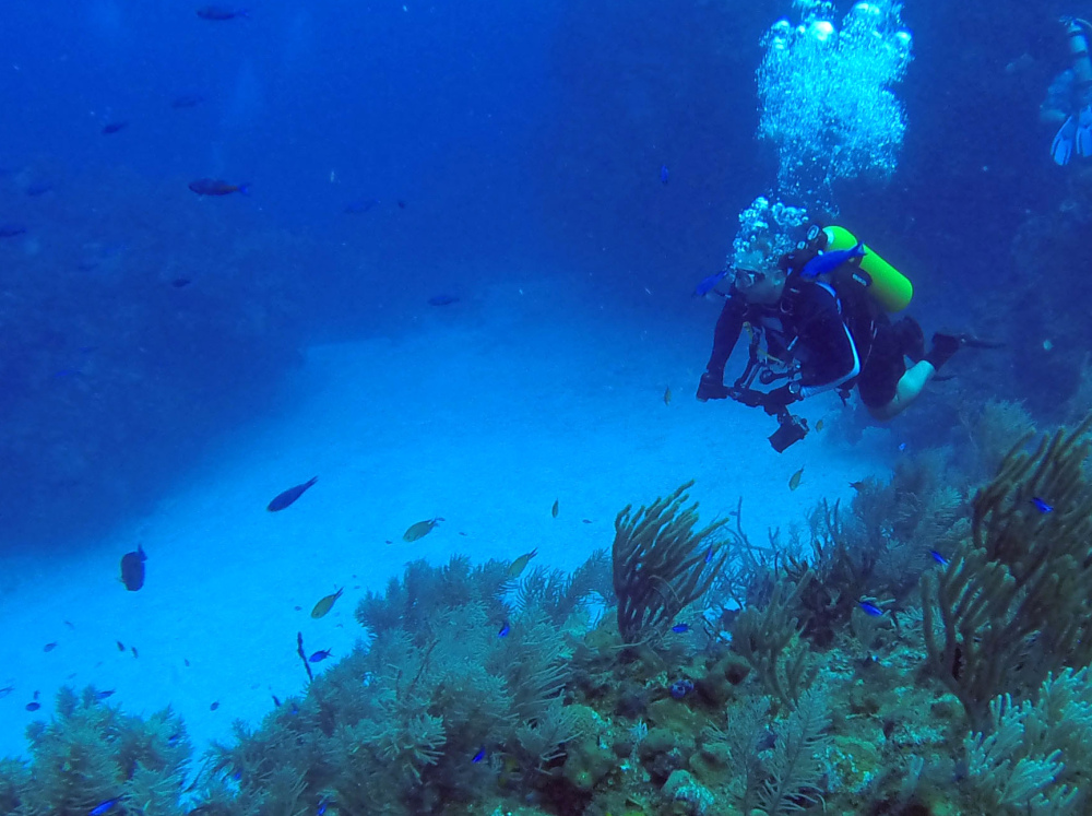 A diver surveys the scene off Cuba's Guanahacabibes peninsula. A new accord between the U.S. and Cuba  allows for researchers to collaborate to protect the marine life here.