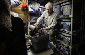 Jock Robie adds compost to one of his worm bins in his Gorham basement.