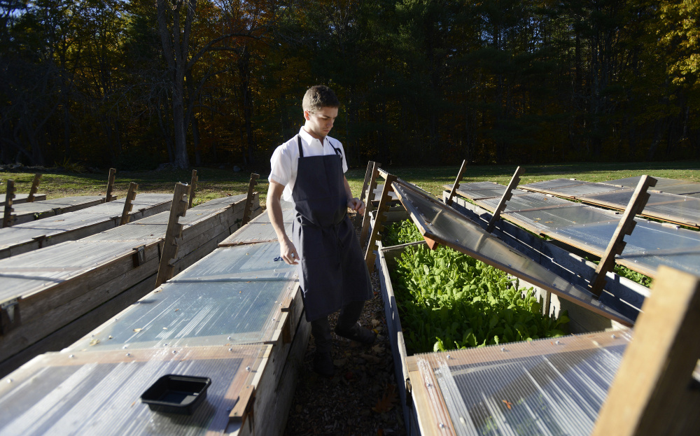 Chef Chris Wilcox goes through the cold frame to gather fresh vegetables prior to making dinner at The Velveteen Habit. Shawn Patrick Ouellette/Staff Photographer