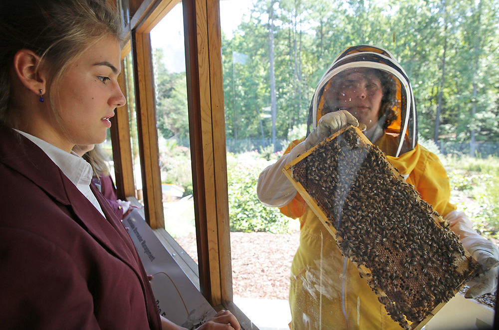 Sarah Myers, a manager at the Bayer North American Bee Care Center, shows a tray of bees to St. Thomas More Academy student Maria Pompi during a tour of the center in Research Triangle Park, N.C., recently. The Associated Press