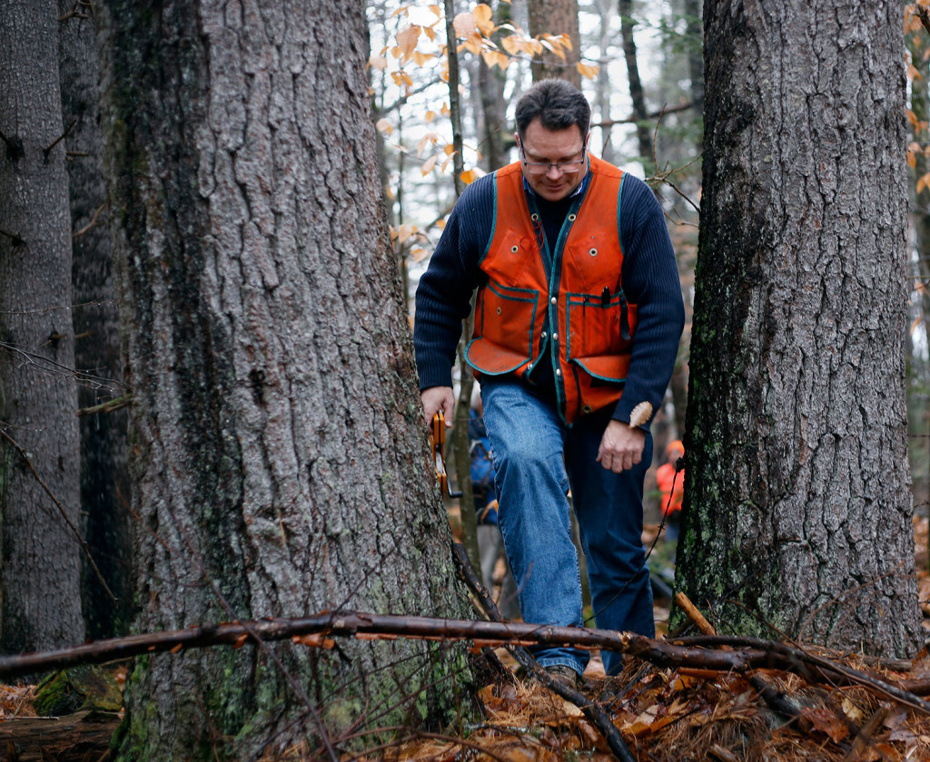Brian Roth, a forest scientist at the University of Maine, runs a measuring tape from the tree in Lovell while trying to determine its height. Derek Davis/Staff Photographer