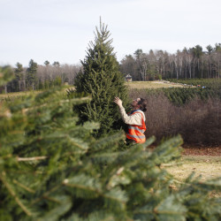 Tristan Wasley works as a groundskeeper at Old Farm Christmas Place in Cape Elizabeth.  Derek Davis/Staff Photographer