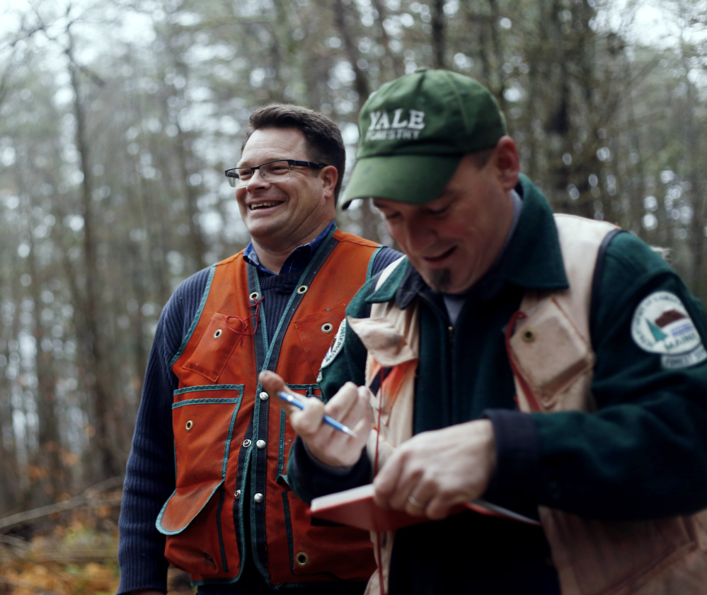 University of Maine forest scientist Brian Roth, left, and Shane Duigan, a forester with the Maine Forest Service, take part in the official measuring process Wednesday in Lovell.