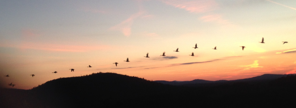 The mild autumn may have delayed these geese from their southbound flight, but they were flying with a purpose at sunset Nov. 25 when 9-year-old Michael Malia took this dramatic photo just above eye level atop Jockey Cap in Fryeburg. Minutes later, the Beaver Moon rose over Mt. Tom, said Malia's dad, Peter.