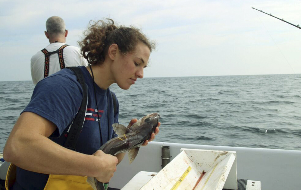 New England Aquarium research technician Emily Jones evaluates the condition of a haddock as part of a study about the mortality of discarded fish, on Jeffreys Ledge off the coast of New Hampshire. Scientists are working with New England fishermen to determine the percentage of fish such as haddock, cod and cusk that survive after they are tossed overboard.