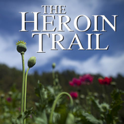 In this Jan. 26, 2015 photo, poppy flowers grow in the Sierra Madre del Sur mountains in Guerrero state, Mexico, Monday. Mexican heroin has become cheaper and more powerful at a time when Americans hooked on pharmaceutical opiates are looking for an affordable alternative. (AP Photo/Dario Lopez-Mills)