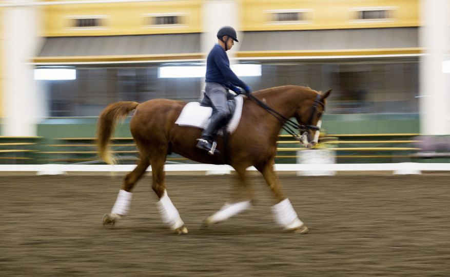 Michael Poulin works with Thor M at Pineland Farms Equestrian Center. Poulin, who found the horse on a trip to Europe and has been training him for years, said he intends to ride Thor M in a series of Olympics qualifying events in Florida through February and March.
