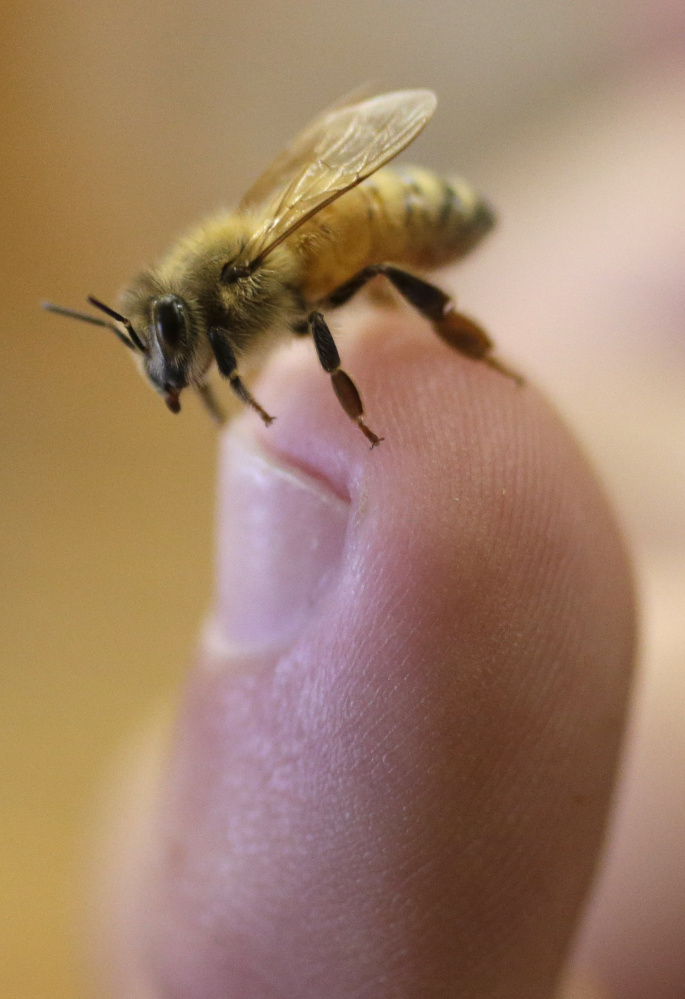 Honeybees are vital to pollination, and their numbers have dropped.