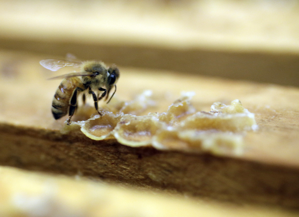 A bee works on a honeycomb at the Gene Brandi Apiary in Los Banos, Calif.  The Environmental Protection Agency has found that a major pesticide harms honeybees when used on cotton and citrus but not on other big crops like corn, berries and tobacco.   The Associated Press