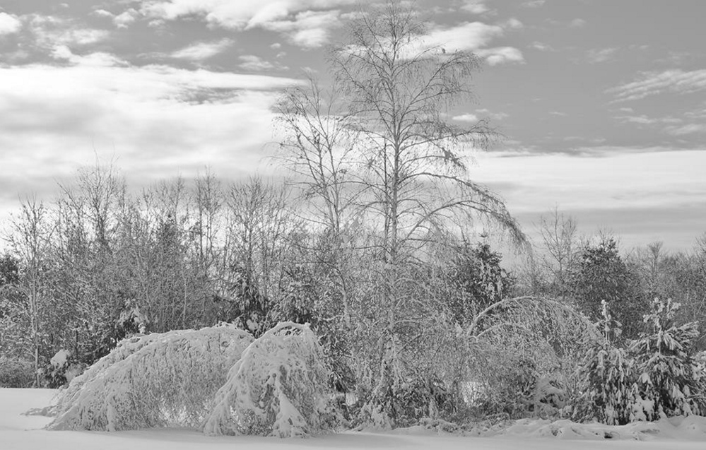 Black and white imagery says it all, as branches remain surrendered to the weight of snow near the Scarborough marshlands. Come spring they'll again be vertical and green, but in the meantime Kelly Mull will have ample opportunties to hone her impressive photo skills with more images of winter wonderlands.