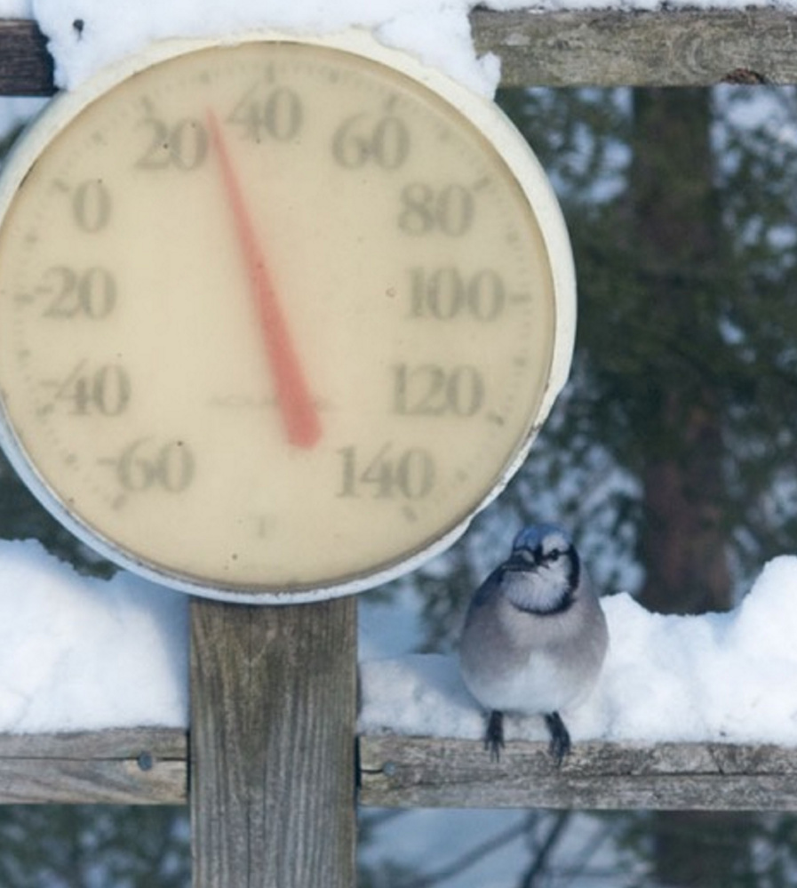"""Freezing temps nothwithstanding, blue jays don't fly south. """"Bring it on,"""" this one seems to tell the thermometer in George Kostovick's Harrison yard."""