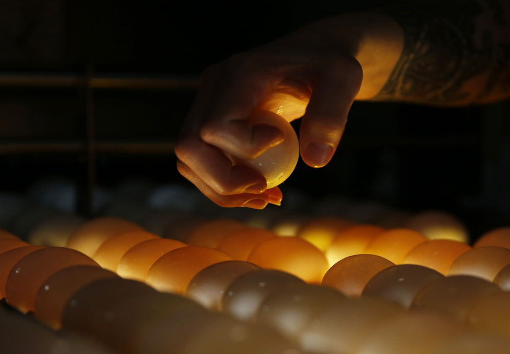 A washed egg is plucked from a conveyor during candling inspection at  Phil's Fresh Eggs in Forreston, Ill. Lighting from below illuminates the fresh eggs, allowing inspectors to detect any flaws.  Chris Walker/Chicago Tribune/TNS