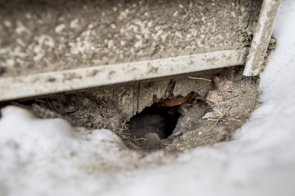 Signs of rodent activity, such as this hole in the foundation of an apartment building in Libbytown, litter the neighborhood. A state official says clearing out shrubbery didn't increase the infestation.