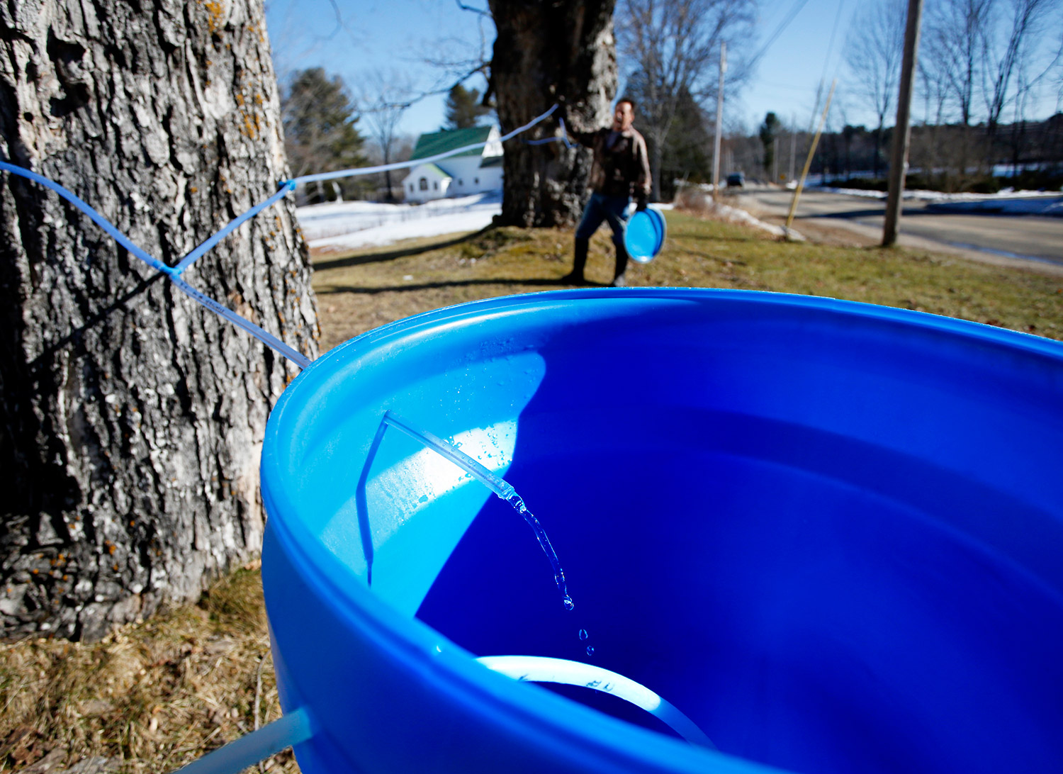 Jeff Berry collects sap from 30-gallon buckets in Buxton on Tuesday. Derek Davis/Staff Photographer