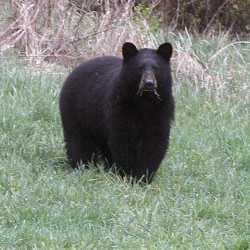 A case related to the 2014 Maine referendum to change the rules of bear hunting will be heard by the Maine Supreme Judicial Court.