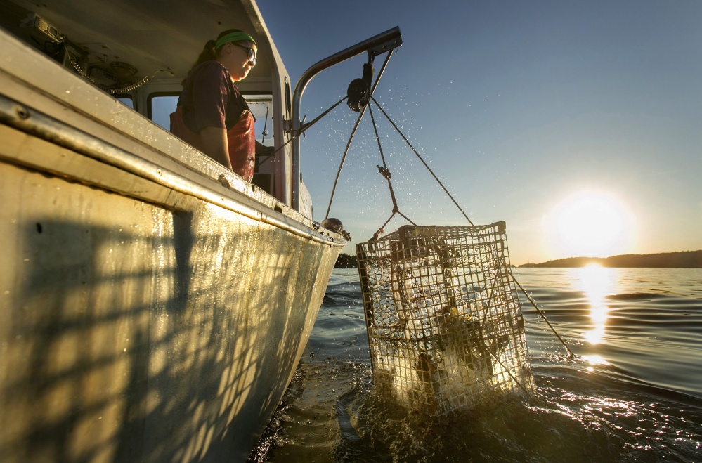 Genevieve McDonald raises a lobster trap off the coast of Stonington last year. Water temperatures in the Gulf of Maine this winter are at near-record highs, and some in the lobster industry worry that the trend could lead to a repeat of the difficult market conditions of 2012.
