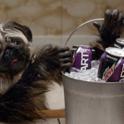 "The ""Puppymonkeybaby"" appears in a scene from Kickstart's ad spot for Super Bowl 50."