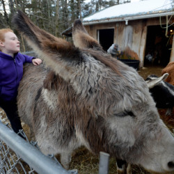 Kelly Tessier, 9, brushes her donkey, Martha, at the family's farm in Skowhegan last week. The Tessiers sell a variety of products, from meat to coffee to soap, and the two Tessier daughters are part of the business.