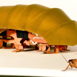 "A researcher says real cockroaches are ""disgusting"" and ""really revolting,"" but the bugs could inspire swarms of robots that could help in a disaster."