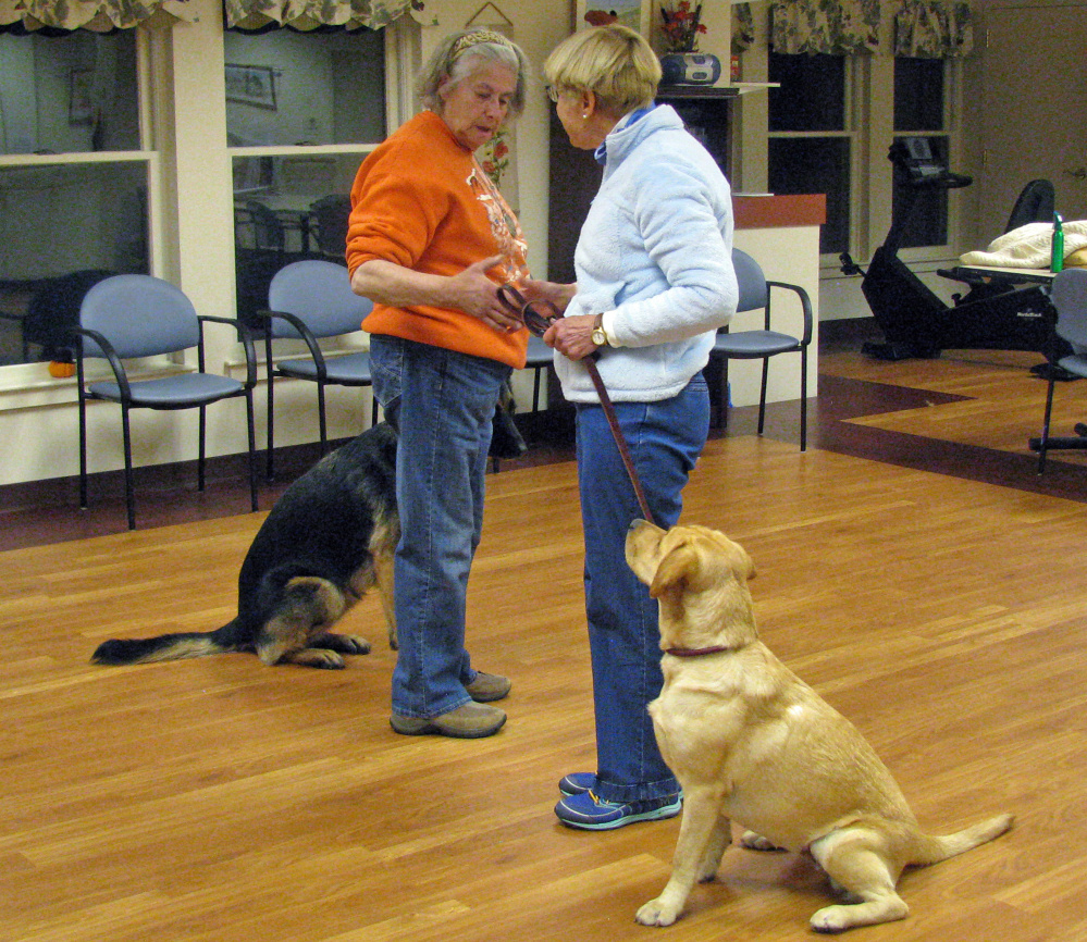 Maine Dog Training Classes