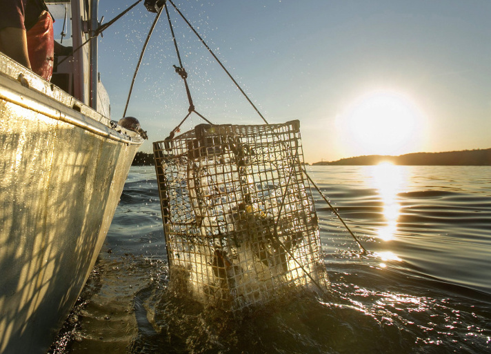 Without more specific data, regulatory agencies and their scientists say they might undercount the lobster stock, possibly triggering management actions that aren't necessary.