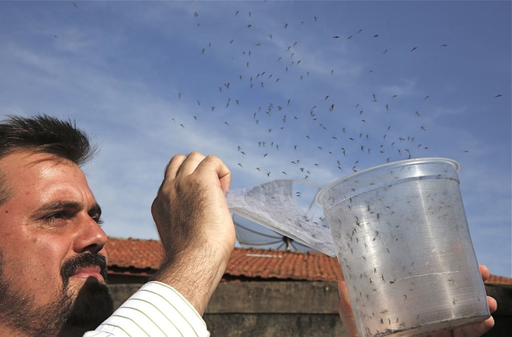 Guilherme Trivellato, from the British biotec company Oxitec, releases genetically modified Aedes aegypti mosquitoes in Piracicaba, Brazil. Oxitec raises male mosquitoes that have been modified to produce offspring that do not live. These males are released into the target area, where they compete with wild males to mate with the wild females. The Associated Press