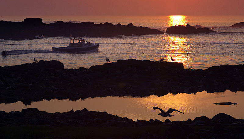 A lobsterman motors through a channel between islands as he leaves Cape Porpoise Harbor at sunrise in Kennebunkport.