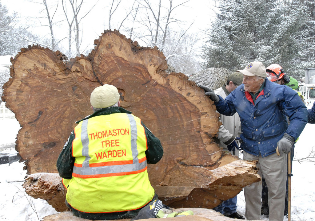 """Frank Knight, 101, Yarmouth's longtime tree warden, watches Peter Lammert with the Maine Forest Service count the growth rings on the massive butt section after the 212-year-old elm tree called """"Herbie."""" The tree was cut down due to the Dutch elm disease."""