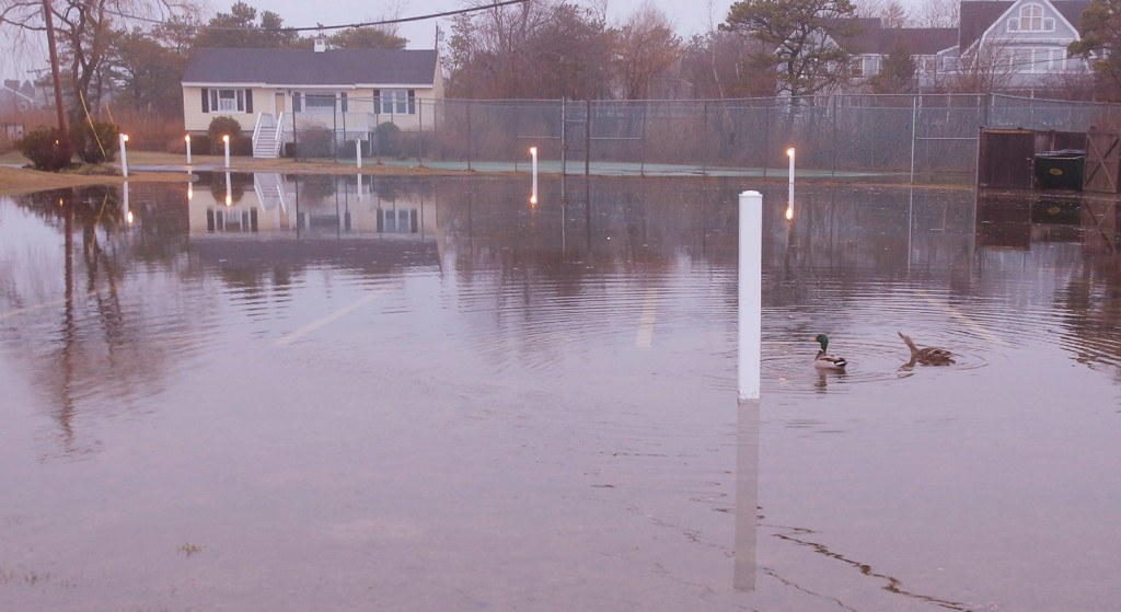 Ducks swim in a parking lot covered in water at the Narraganset by the Sea condominiums in Kennebunk early Friday. Splash over during the high tide overnight created minor flooding issues along parts of the coast.