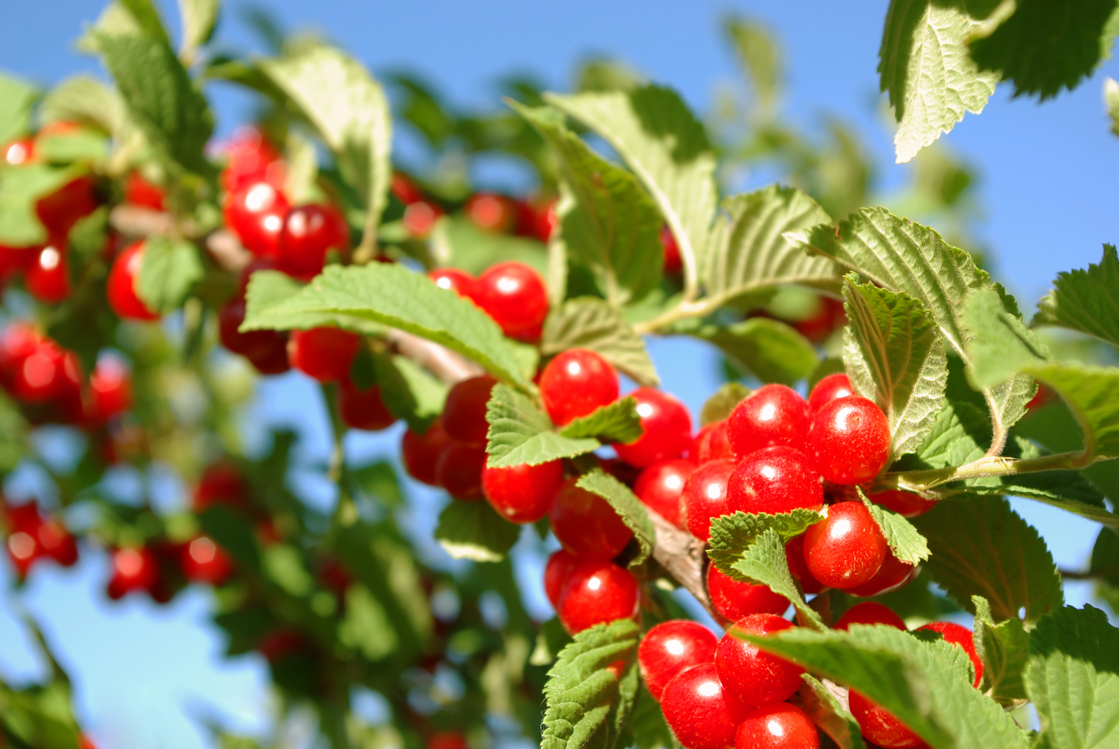Popular Plants This Year Make Good Eating For Humans Or
