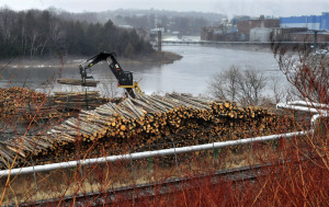 A worker unloads logs used to make paper at the Madison Paper Industries mill in Madison last month. As many as 1,000 of the state's 5,000 loggers could be out of work by summer because of decline in the demand for wood.