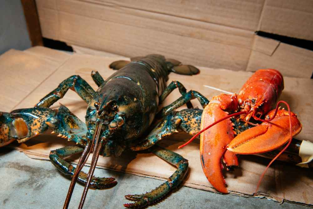 Are Maine lobsters invading Europe? Even among Swedes, not everyone's buying it - Portland Press ...