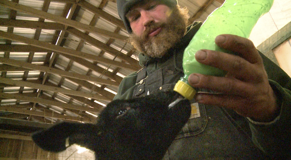 Chris Basford, the flock manager at North Star Sheep Farm, bottle feeds a 10-day-old lamb. When the spring lambing season is underway it's all hands on deck at Maine's largest sheep farm.