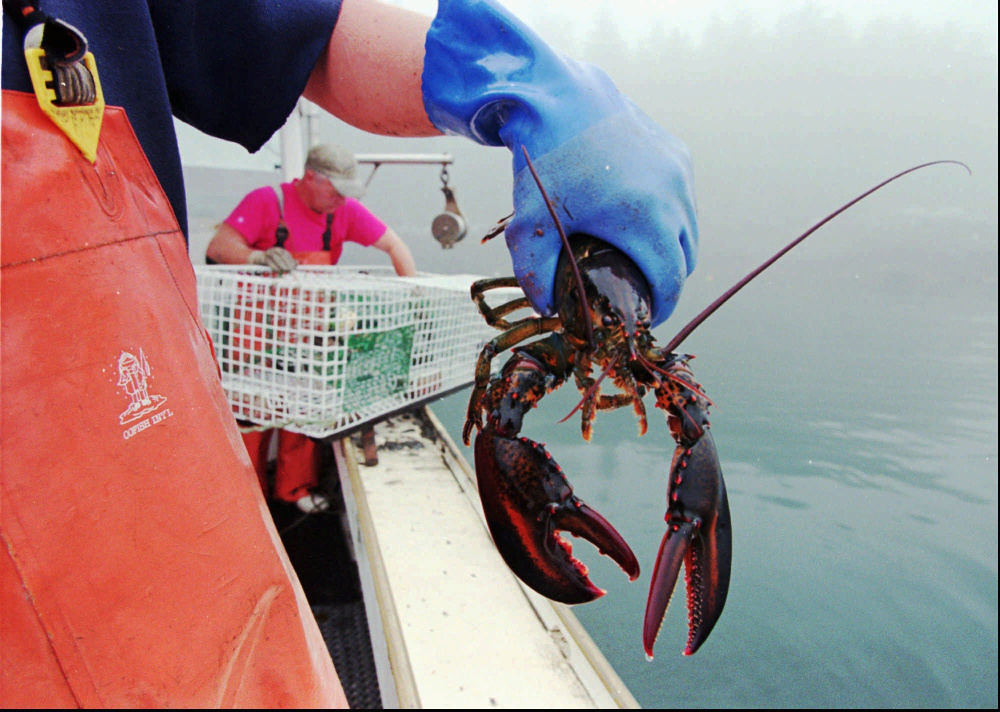 A proposed ban on imports of live American lobster into the European Union's 28 member countries would result in a $10 million annual hit to the pockets of Maine lobstermen.