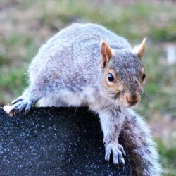 849170_438252 Squirrel.jpg