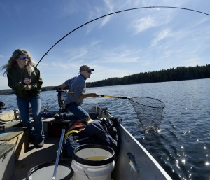 Lisa Thibeault reels in a brown trout Thursday as fish culturist Greg Massey gets the net ready on Sabbathday Lake in New Gloucester.