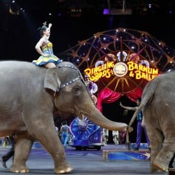 A Ringling Bros. and Barnum & Bailey Circus show features elephants in 2015. The circus elephants performed for the last time Sunday in Rhode Island and Pennsylvania.