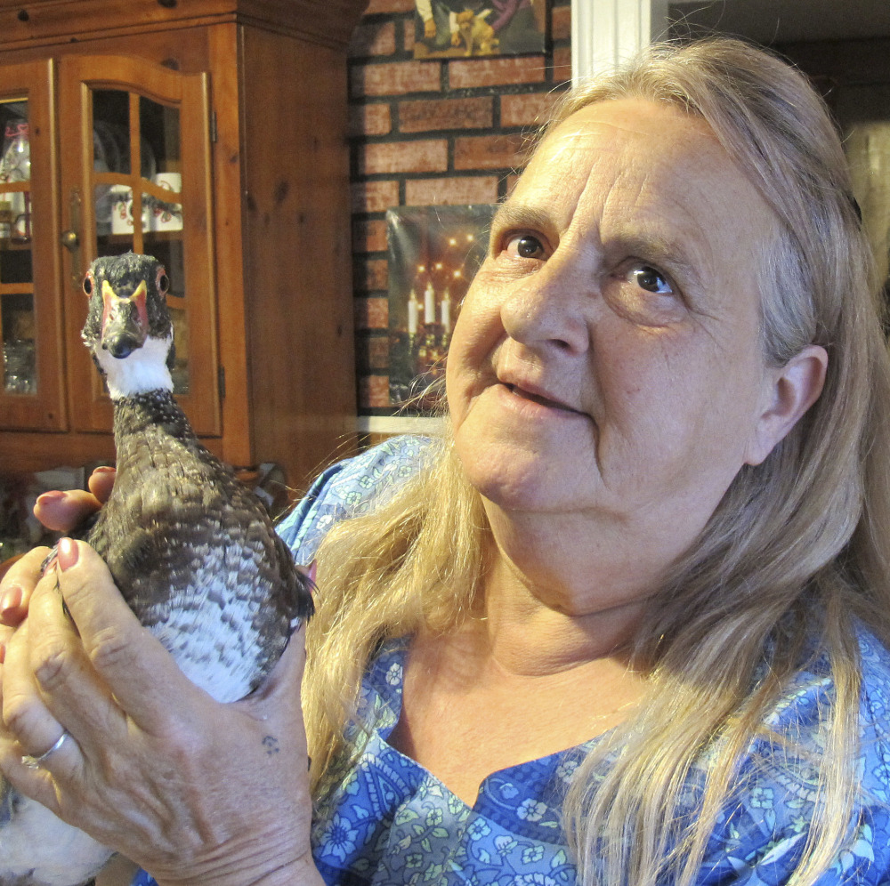 Kimberlee Stevens holds Peep, age 3, a wood duck that was just a chick when her dog brought it home.