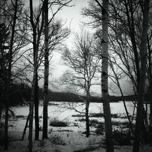 The woods on the banks of the Allagash River provide a stark, serene scene, as photographed on a Rolleiflex film camera.