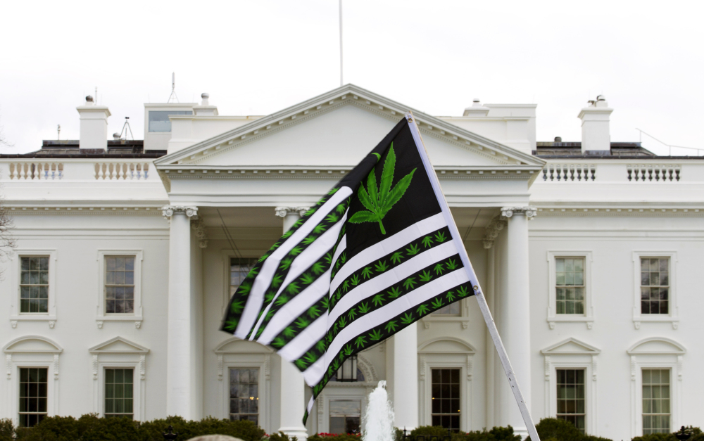 A demonstrator waves a flag with marijuana leaves on it during a protest calling for the legalization of marijuana outside the White House in Washington last month. The degree to which a driver is impaired by marijuana use depends a lot on the individual, a study concludes.